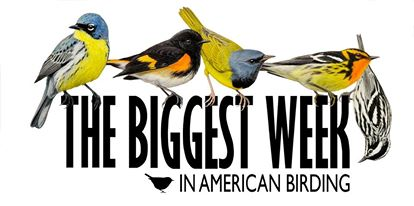 The Biggest Week In American Birding
